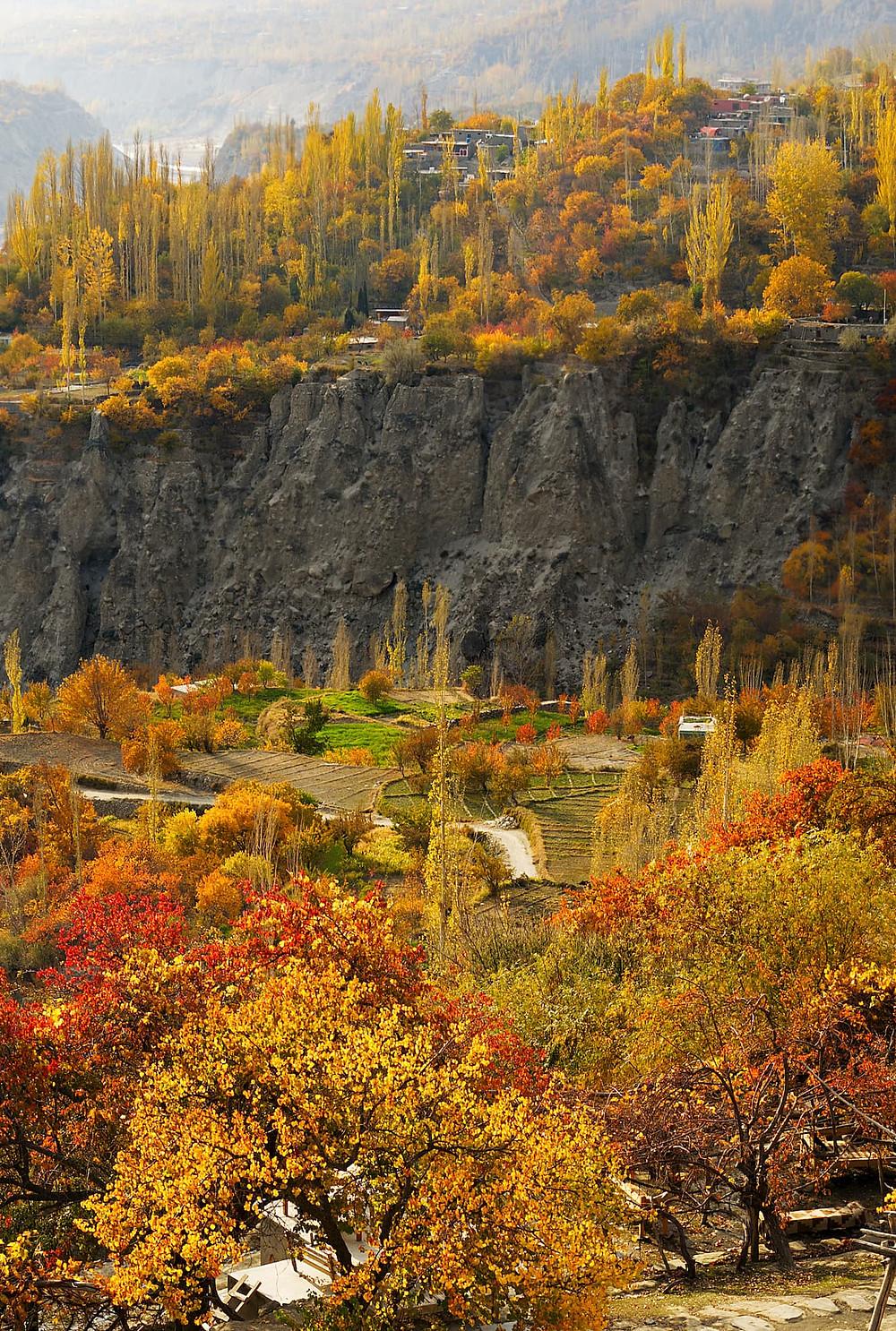 hunza valley autumn trees