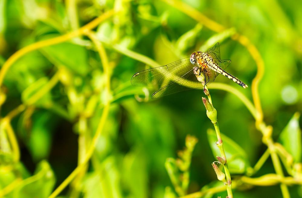 dragonfly in the garden of bahia mar
