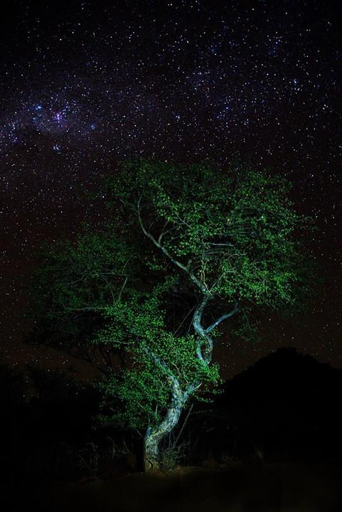 night shot of the stars