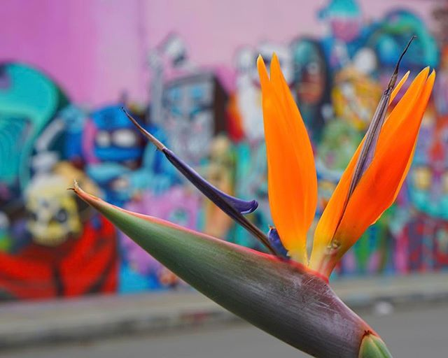 #flowers & #grafitti #together _ both ends of the social scale side by side in #medellin #colombia -_-_travel #traveling #travelgram #instat