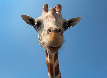 Il linguaggio giraffa: la comunicazione non violenta secondo Rosenberg