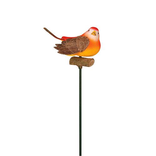 Pássaros Canário Simples