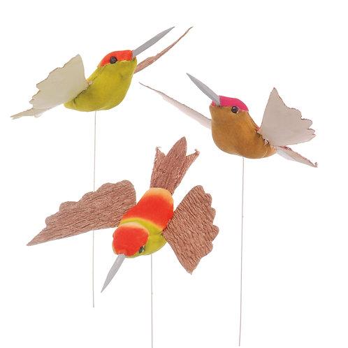 Pássaros Beija-Flor Cores Mistas