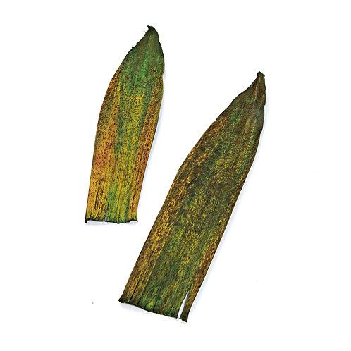 Folha de Bamboo Verde