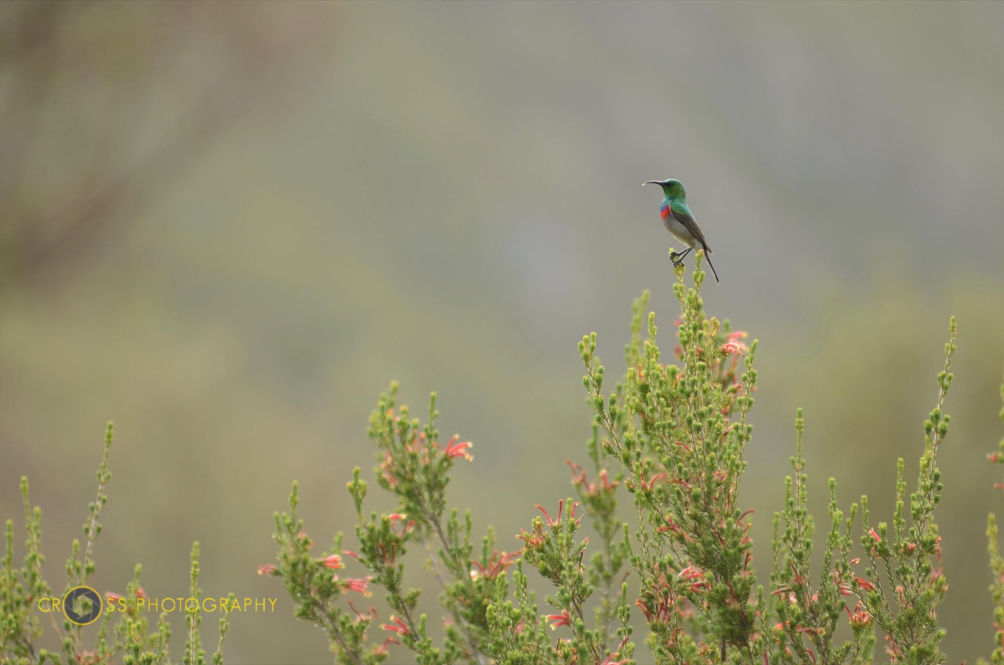 Wer kennt diesen Vogelart?