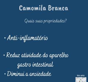 camomila 2.jpeg