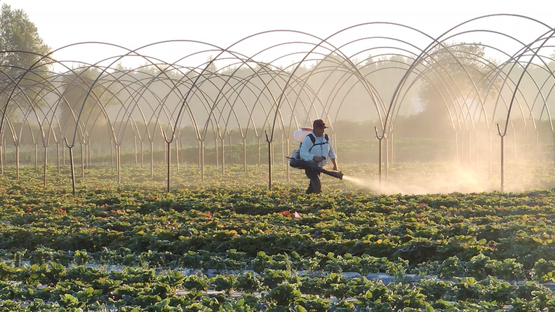We try to limit our spraying to only what is necessary and take great care to use organic products for the control of some plagues and diseases. We document and keep records of our spraying in order to protect our crops and clientele.