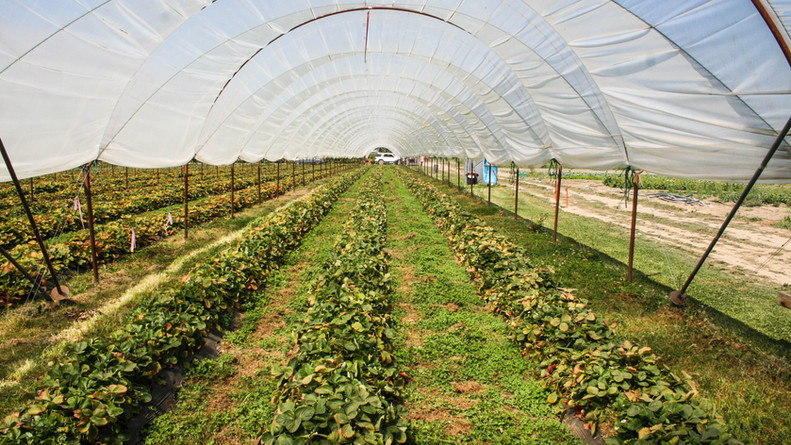Our new system of micro tunnels will allow us to offer new products to our community in 2019, such as tomatoes, tomatillos, peppers, etc.