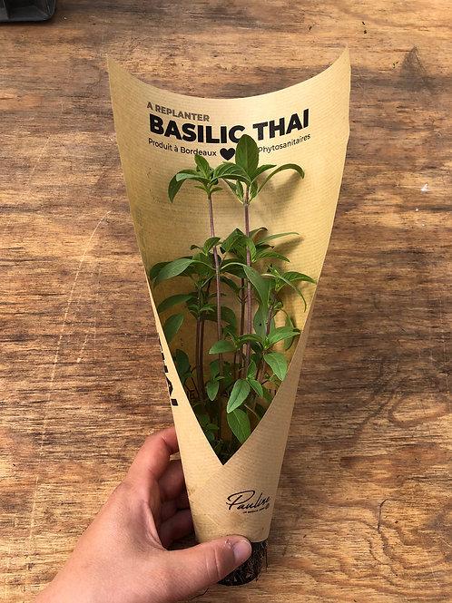Basilic Thai à replanter