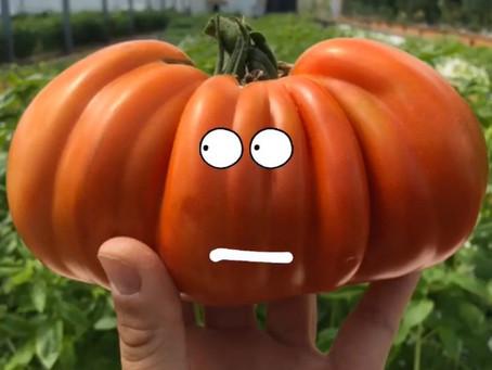 C'est de saison ! Nos conseils pour vos tomates