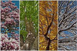 Les quatres saisons Vata