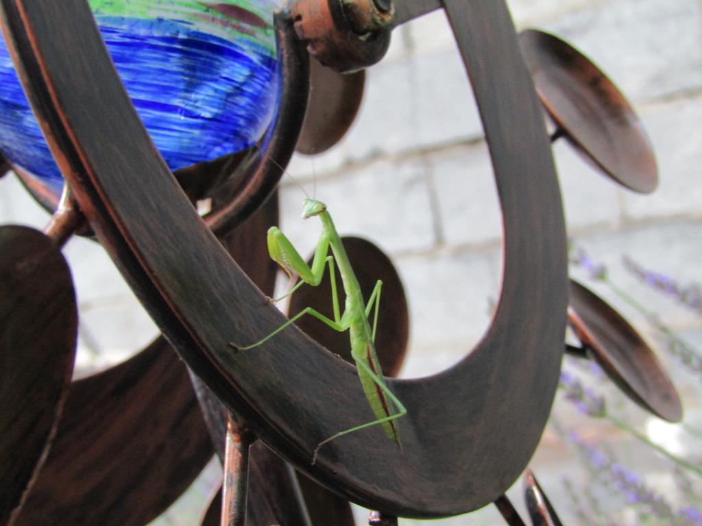 Praying Among the Peas