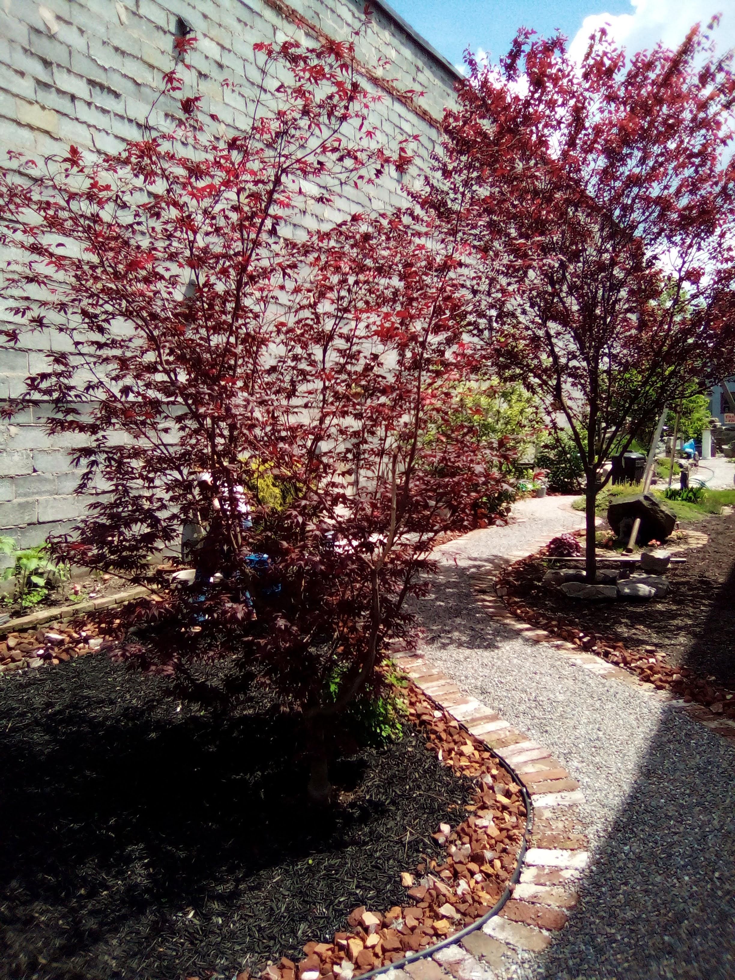 The Garden Trees