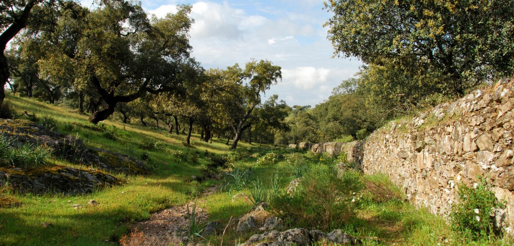 Fundación Montemediterraneo  - Stiftung zum Erhalt der Dehesas