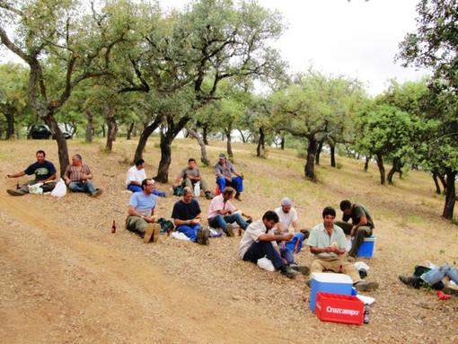 ... kein Picknick schmeckt besser!