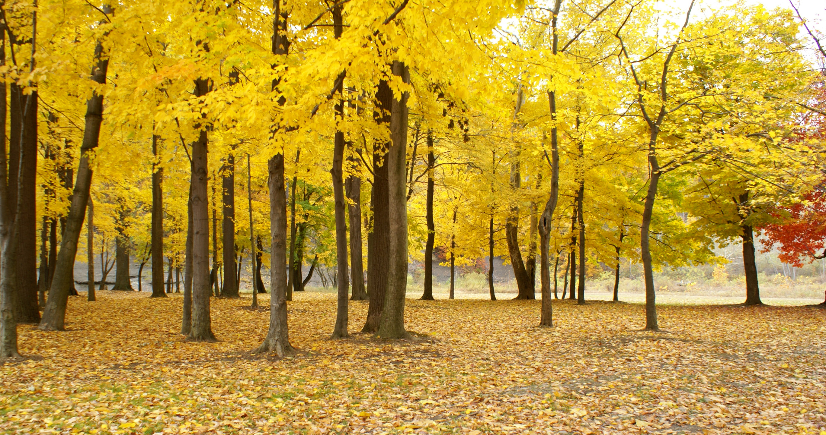 K_Brewer-Yellow of Autumn by the Smolen Bridge