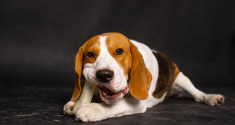 Dog photography in hyderabad