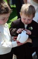 wedding dove release Cardiff