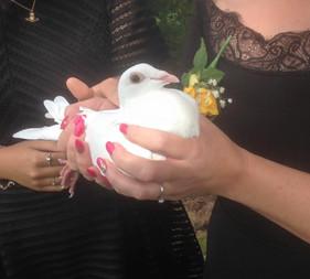 white dove for a funeral Gwent Crematorium