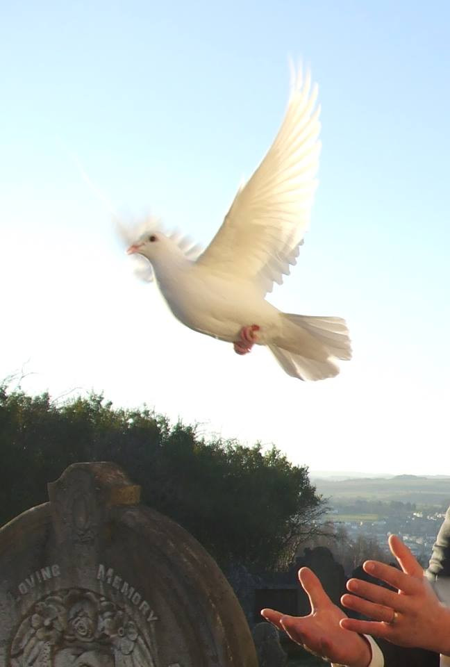 Release a white Dove for a Funeral Cardiff
