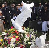 Hire Doves for a funeral Newport South Wales