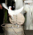 Release white doves from a basket for a wedding Pontypridd
