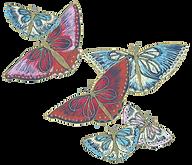 papillons copie.png