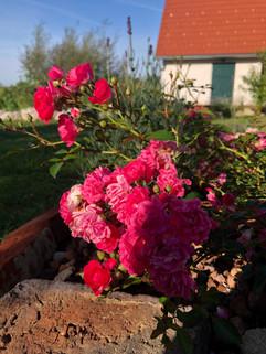 Ein Blick in den Garten.