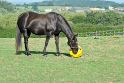 yellow hay play