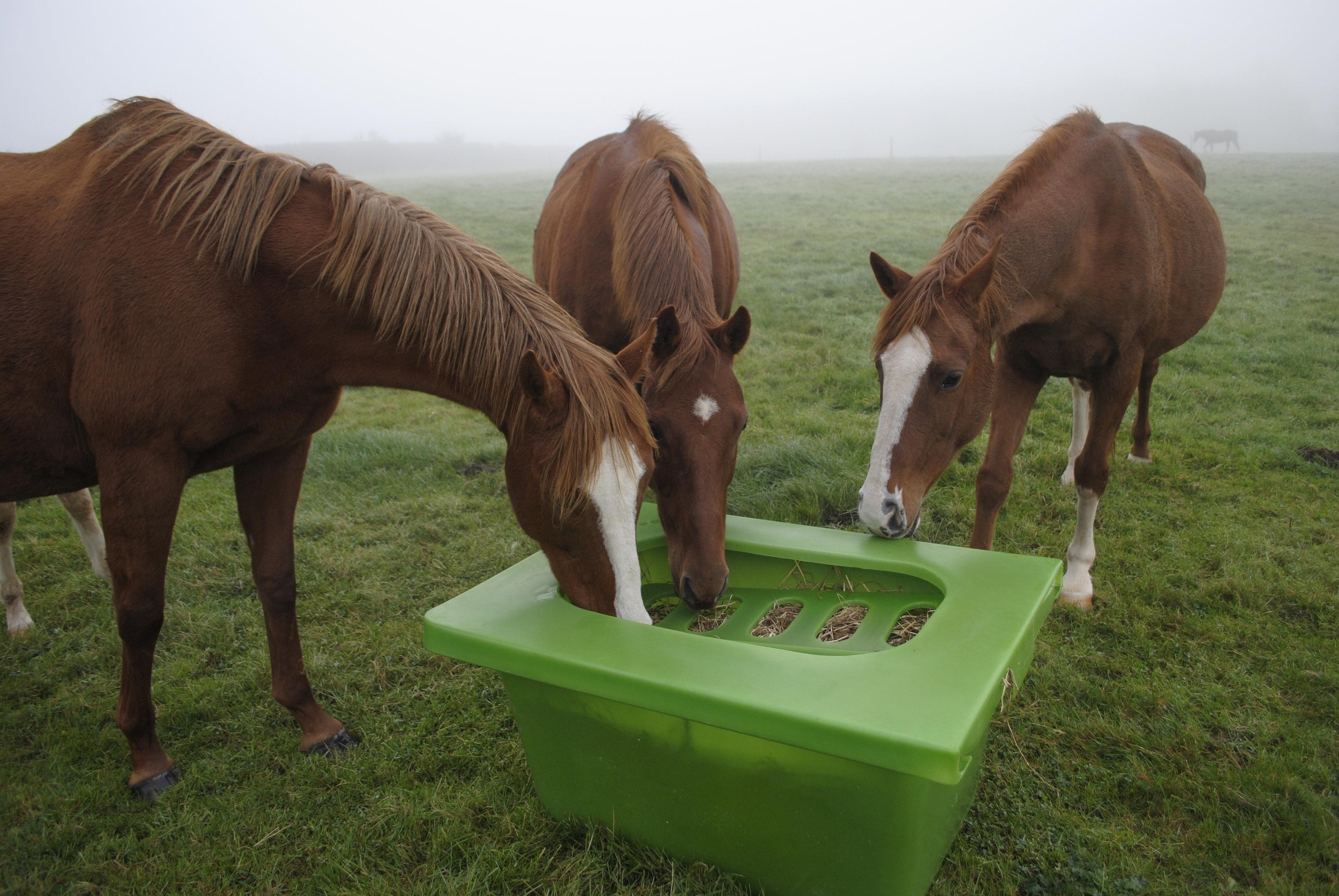 Horse Hay Feeder, corner, hay saver, slow feeder, UK ...