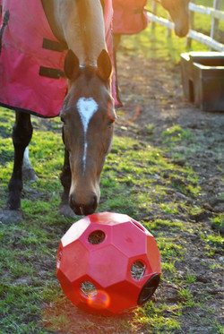 Parallax  HAY PLAY - red with hatch