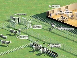 RFID-идентификация животных или СКУД на ферме