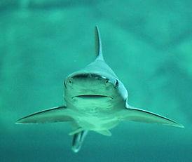 hai-water-sea-fish-preview.jpg