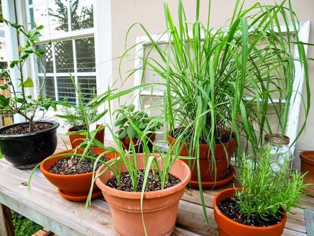 INTRO TO | Edible Garden