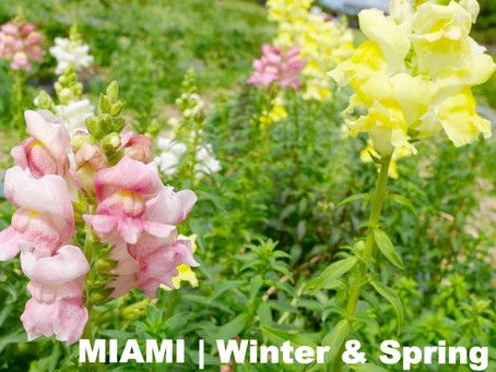 MIAMI | Winter & Spring