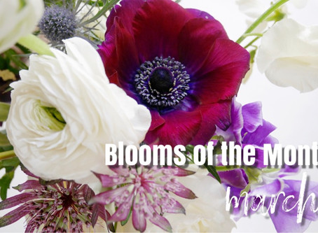 BLOOMS OF THE MONTH |March