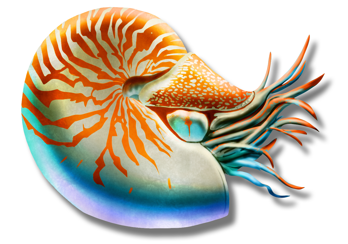 M3_Nautilus_v3