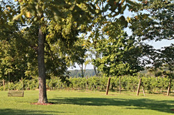 Avery Vineyard