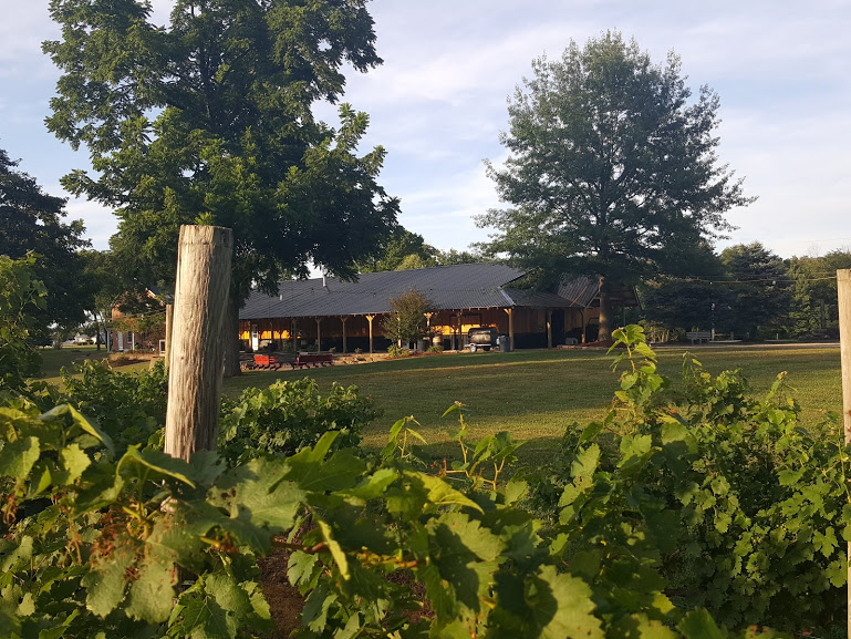 View from Avery Vineyard