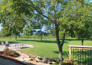 View of vineyard and property from covered patio