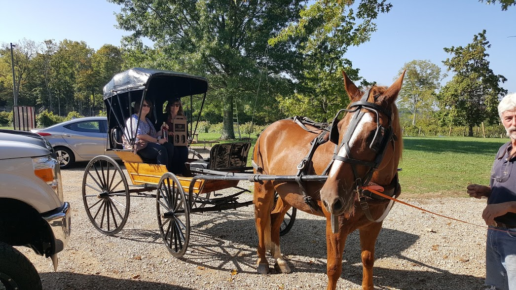 Russel's horse & buggy