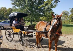 Russel Schaeffer w/ his horse & buggie!