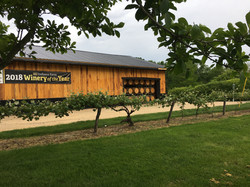 Winery - Concord vines