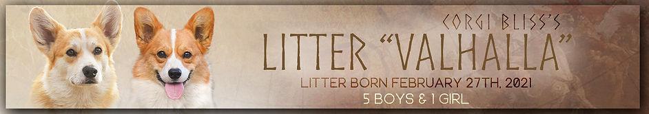 Valhalla Litter Thin Banner copy.jpg