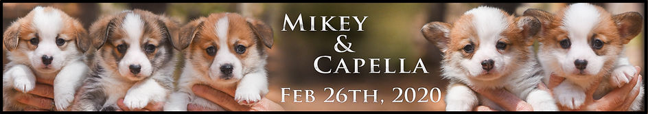 Mikey x Capella Feb Website Past LT copy