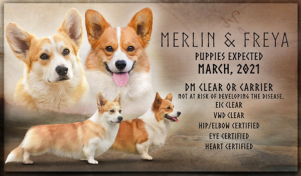 Freya x Merlin website pairing Planned L