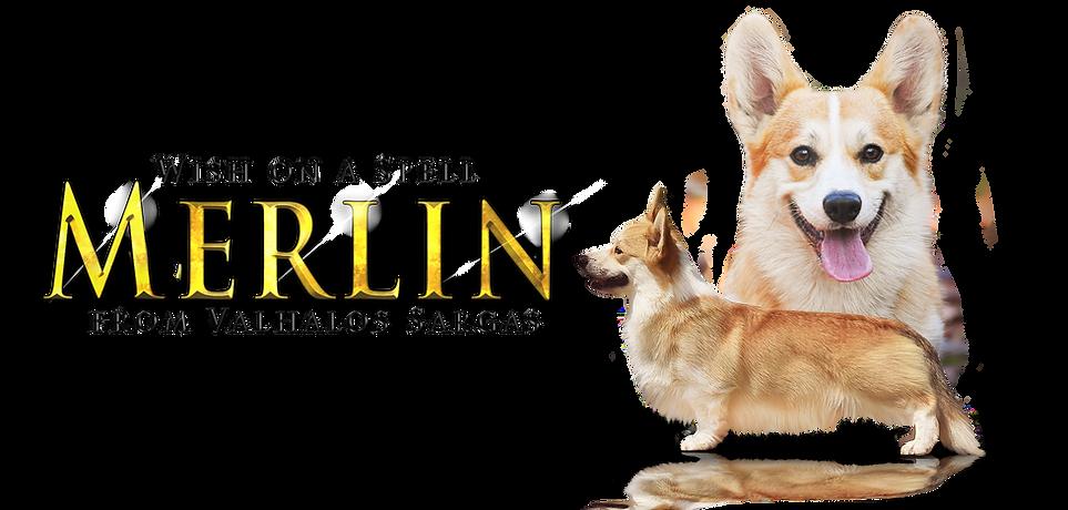 Merlin website clear BG 4.png