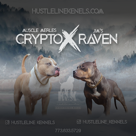 Crypto x Raven 11.10.19.png