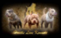 Website Banner Nov 7 19.jpg