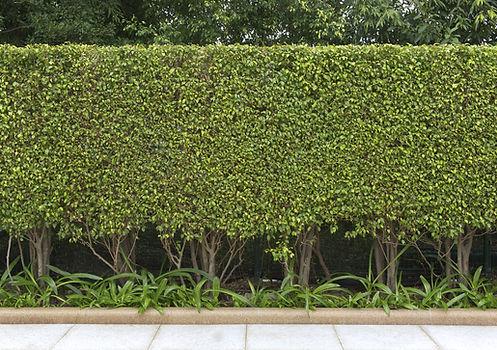 Mise en valeur de la maison avec un jardin épuré sur mesure